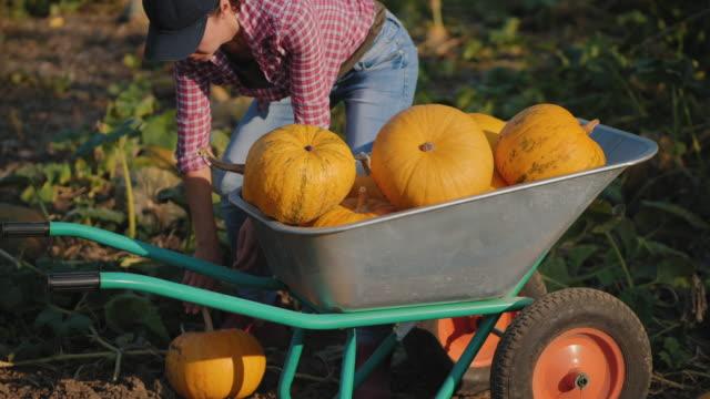vídeos y material grabado en eventos de stock de poner calabaza en una carretilla - cosechar