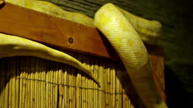 Pyhton Snake