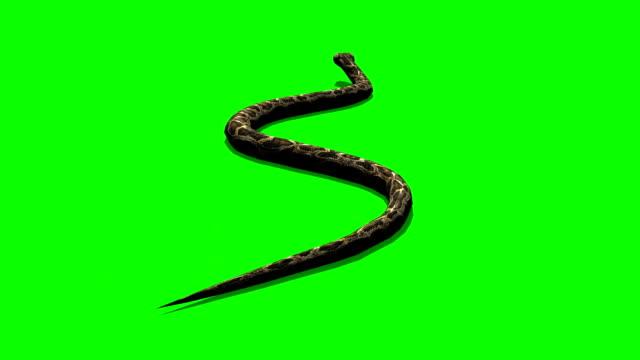 vídeos y material grabado en eventos de stock de pitón diamante crawls-pantalla verde - serpiente