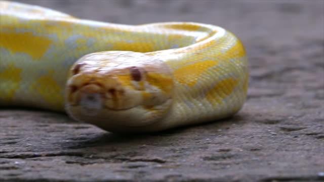 Python. video