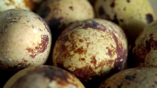 Quail eggs close up dolly shot video