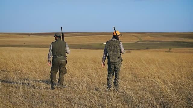 vidéos et rushes de chasse à la caille, un chasseur marche prudemment à travers le champ avec un fusil à la main tout en chassant sa proie, chasseur avec ses chiens, chasseur dans l'embuscade, hunter voit la proie et conduit son chien à la chasse, chasseur avec son chie - chasser