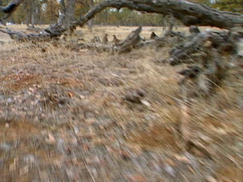 stockvideo's en b-roll-footage met quail - natuurgrond
