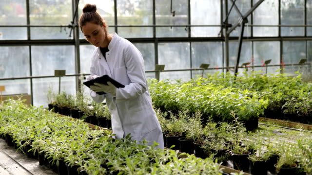 温室の品質管理 - ベジタリアン料理点の映像素材/bロール
