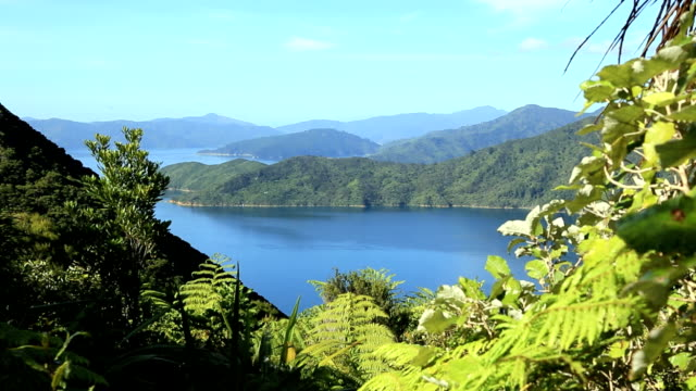 Queen Charlotte Track Landscape, Picton, New Zealand video