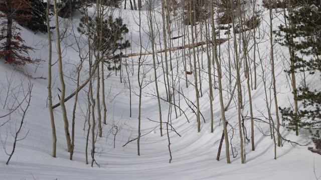 vídeos de stock, filmes e b-roll de tigela tranquila de aspens lançando sombras na neve - aspen colorado
