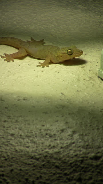 quiet gecko canon hv30 gecko stock videos & royalty-free footage