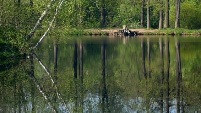 Quiet pond in the middle of forest. video