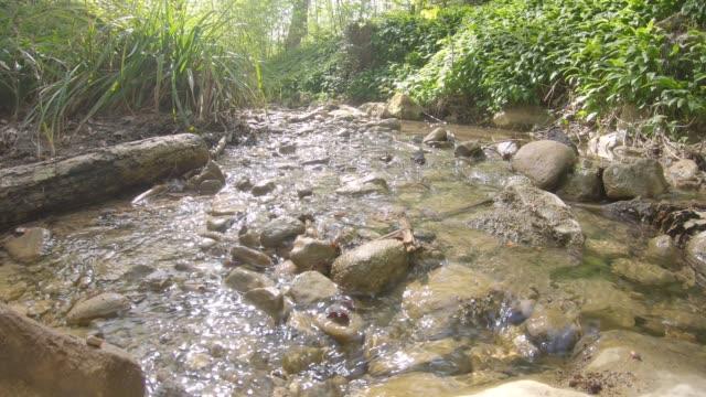Quiet stream flows in his bed Bach fliesst ruhig im Frühling in seinem Beet bei Sonnenlicht wasser videos stock videos & royalty-free footage