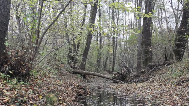 Quiet stream in forest with fallen leaves