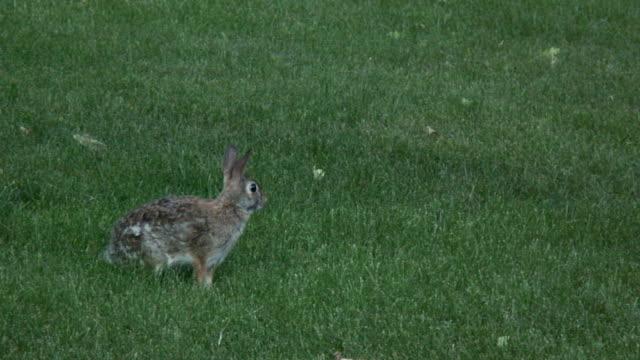 Rabbit 6-10: HD 1080/60i video
