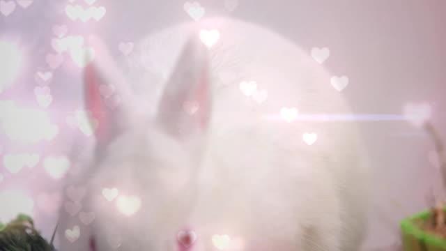 ウサギと心 - バレンタイン チョコ点の映像素材/bロール