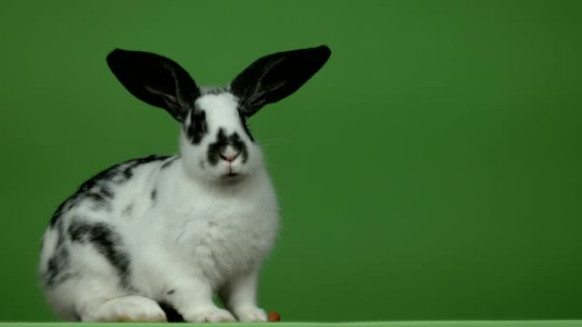 rabbit ate all the carrots on a green background - pasqua video stock e b–roll