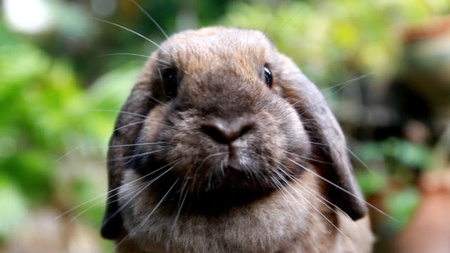 Rabbit cute face video
