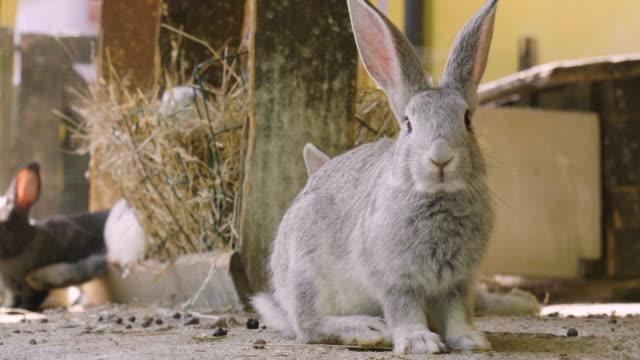 vidéos et rushes de un lapin mangeant de l'herbe verte dans la prairie et regarde autour de la nature qui l'entoure. - apprivoisé