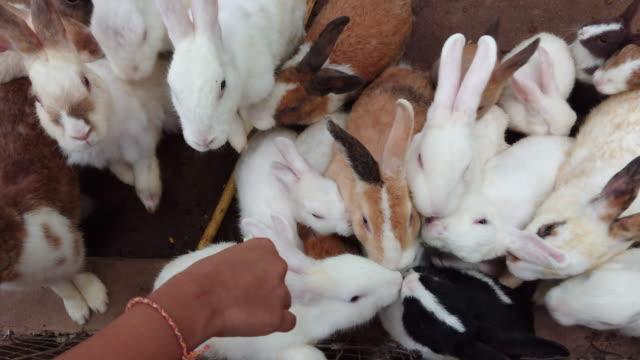 Rabbit eats vegetables