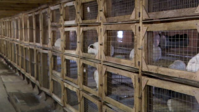 vídeos de stock e filmes b-roll de rabbit farm on an industrial scale. white and gray rabbits in cages. - meat texture