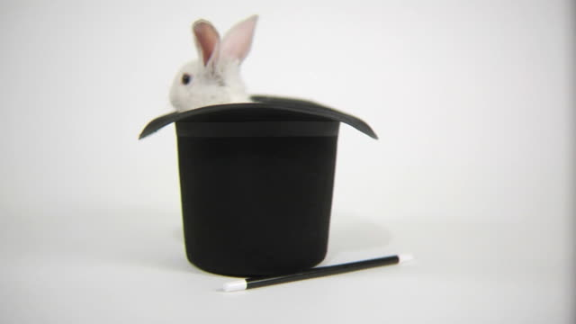 Rabbit hops out of magicians hat video
