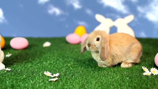 Rabbit in easter scene video