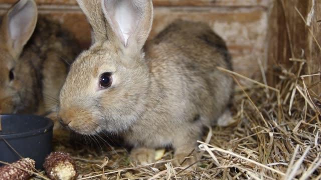 vidéos et rushes de lapin à la ferme familiale - foin