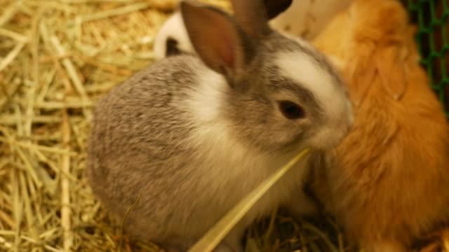 vidéos et rushes de lapin à la ferme - foin