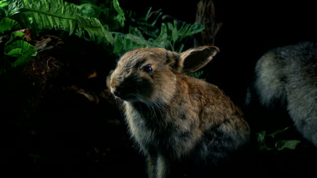 Rabbit In Natural History Display Rabbit in display with ferns stuffed stock videos & royalty-free footage