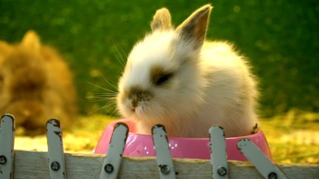 Rabbit in Pet Shop