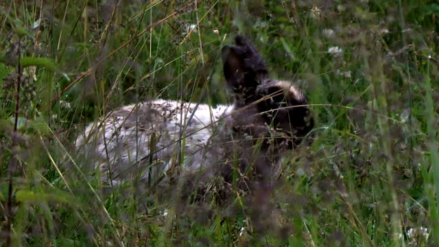 rabbit is hiding in the grass