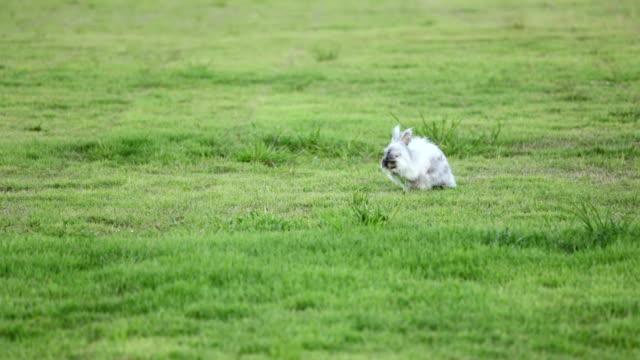 Rabbit on grass field video
