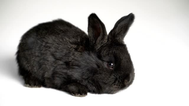 kaninchen oder hase auf weißem hintergrund - hase stock-videos und b-roll-filmmaterial