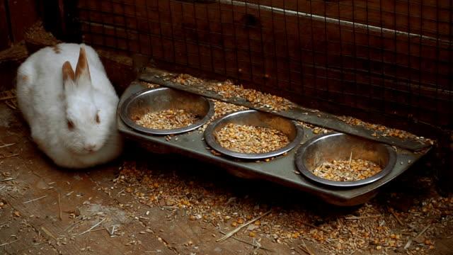 vidéos et rushes de lapin. lapin mange des aliments - apprivoisé