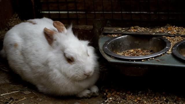 vidéos et rushes de lapin. lapin est endormi - apprivoisé