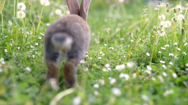 Rabbit running happy on Grass.