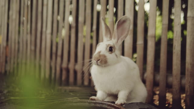 rabbit runs in a garden. - gardino video stock e b–roll