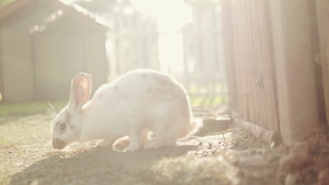 Rabbit runs in a garden.