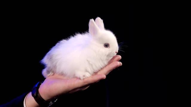 vidéos et rushes de lapin est assis sur le bras du magicien sur la scène sombre - chapeau