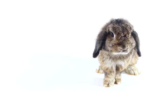 kaninchen - osterhase stock-videos und b-roll-filmmaterial