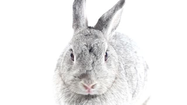 rabbit - tavşan hayvan stok videoları ve detay görüntü çekimi