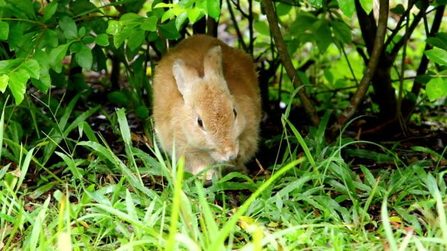 кролик - уход за поверхностью тела у животных стоковые видео и кадры b-roll
