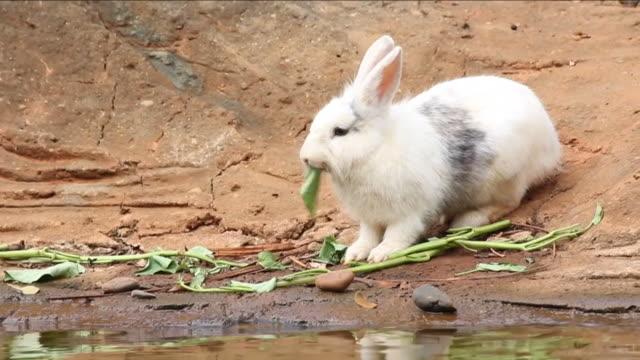 vídeos y material grabado en eventos de stock de conejo - vibrisas