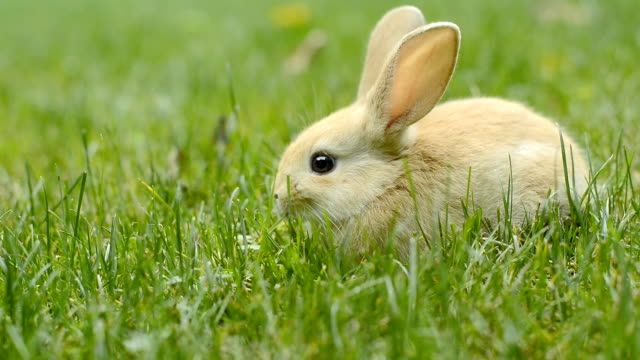 kaninchen - nutztier oder haustier stock-videos und b-roll-filmmaterial