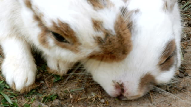 Rabbits are cleaning their fur with other rabbits by preen fur.