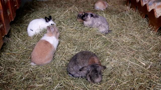 Rabbits eat green juicy grass video