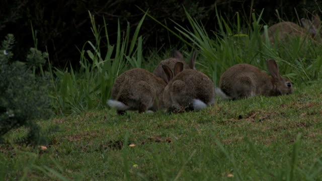 Rabbits Feeding 1080p A shot of rabbits feeding in 1080p videos of dogs mating stock videos & royalty-free footage