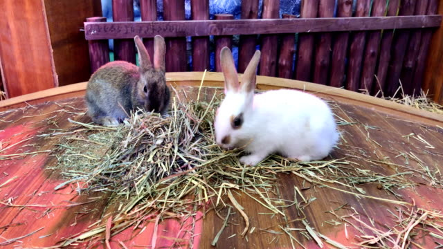 Rabbits in cage are eating grass on the farm very tasty and happy.