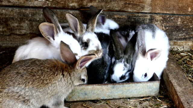 Rabbits in farm video