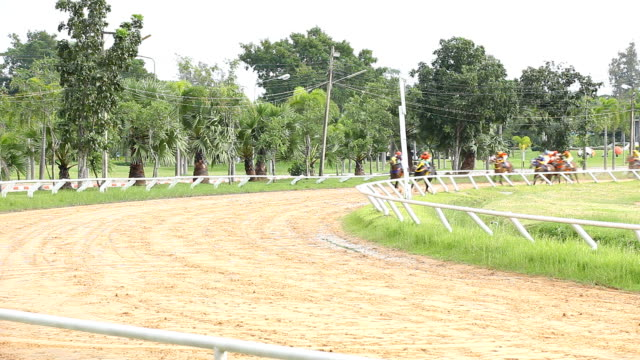 race horse in the field. - horse racing stok videoları ve detay görüntü çekimi