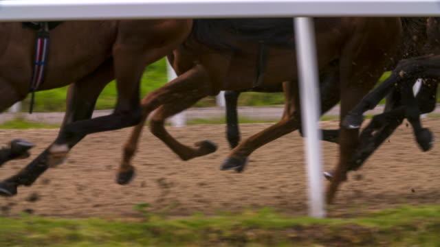 rennpferde beine synchronisiert. - pferderennen stock-videos und b-roll-filmmaterial