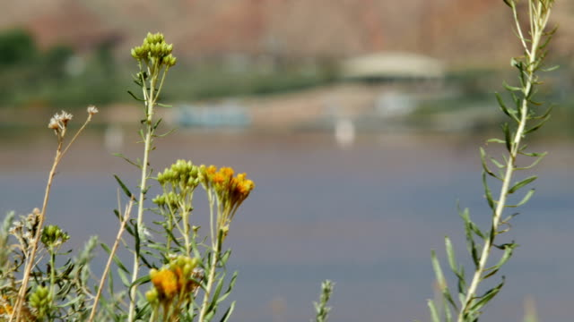 Rack focus flowers to rafts at Lee's ferry Grand Canyon Colorado River video