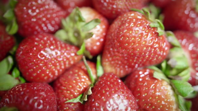Rack Focus on Pile of Fresh Picked Ripe Organic Strawberry Fruit with Sharp Detail video